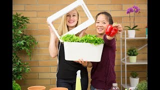 GROW VEGETABLES AND HERBS INDOORS WITHOUT SUNLIGHT