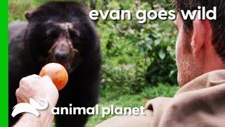 Hand-Feeding A Semi-Wild Spectacled Bear In Peru | Evan Goes Wild