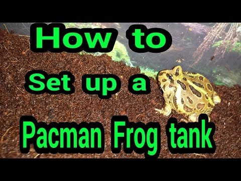 How To Set Up A Pacman Frog