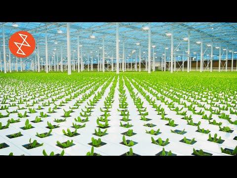 , title : 'How Greenhouses Grow Food Without Soil | Où se trouve: Lufa Farms