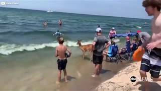 Deer Enjoys A Day At The Beach On Lake Michigan