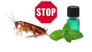 Little Known Way to Kill Roaches