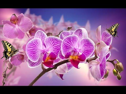 Орхидея Приметы и суеверия