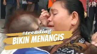 Download Video Haru! Ibu ini anggap Orangutan anaknya MP3 3GP MP4