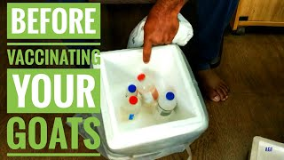 Before Vaccinating Your Goats  | Apna Goat Farms