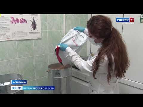 В Астраханской области Управлением Россельхознадзора осуществлен досмотр подкарантинной продукции, предназначенной на экспорт