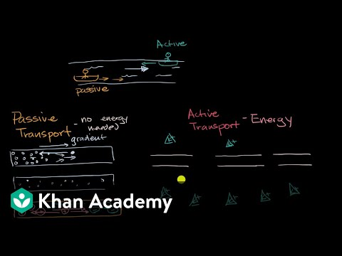 Introduction to passive and active transport (video) Khan Academy