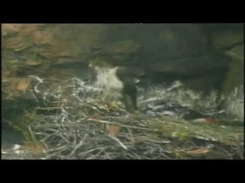 Audiovisual: Torreón de Sobradillo (Parte 2/3)