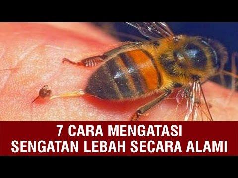 Video 7 CARA MENGATASI SENGATAN LEBAH SECARA ALAMI