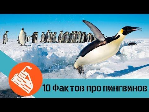 10 ФАКТОВ ПРО ПИНГВИНОВ