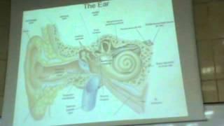 "Dr Gihan -eye3 & ear1 part 2 "" Eye lid / lacrimal apparatus / External & Middle Ear """