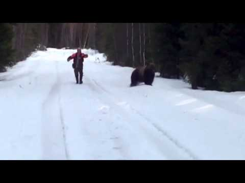 Swedish man scares the living shit out of an attacking bear (hilarious)