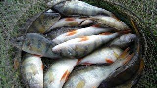 Река проня рязанской области рыбалка карта