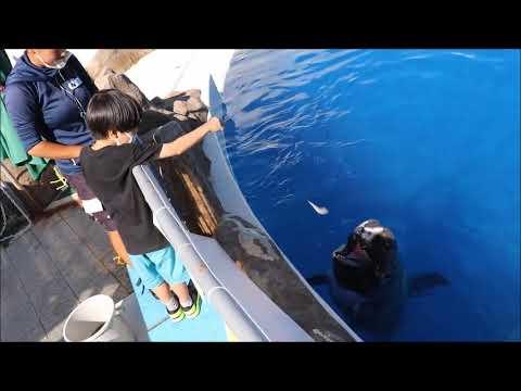 2020.09うみたまご「クジラのエサやり体験」