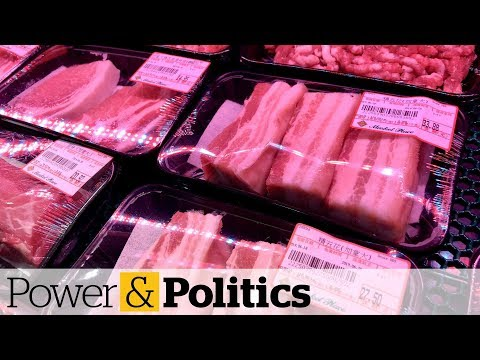 China considering halting all meat products from Canada | Power & Politics