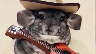 🐹 Funny and Cute Chinchillas Compilation 🐹 [Funny Pets]