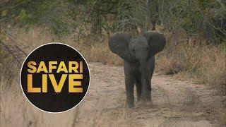safariLIVE - Sunset Safari - July 9, 2018