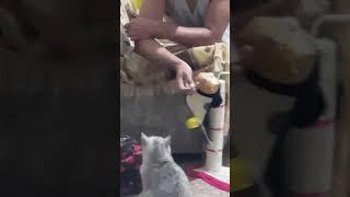 Мой кот - неваляшка