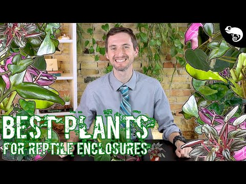 , title : 'Five of the Best Plants for Reptile and Amphibian Enclosures