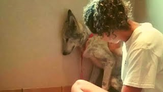 This Abandoned Wolf Dog Always Stayed In A Corner  Now He's Inseparable from His New Best Friend