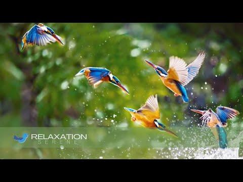 Musica Relaxante Meditacao Profunda Cachoeira  Top70