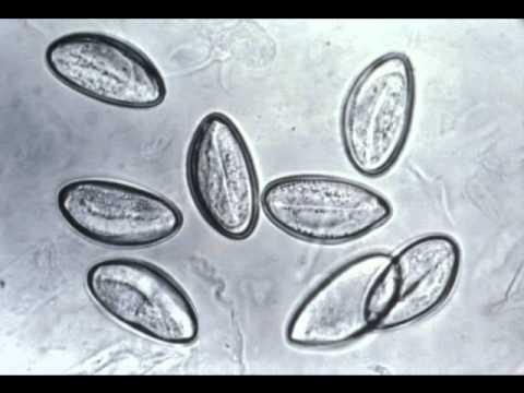 Papillomavirus natural treatment