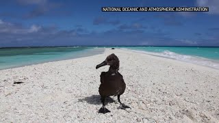 Iconic bird sanctuary ravaged by plastic and death