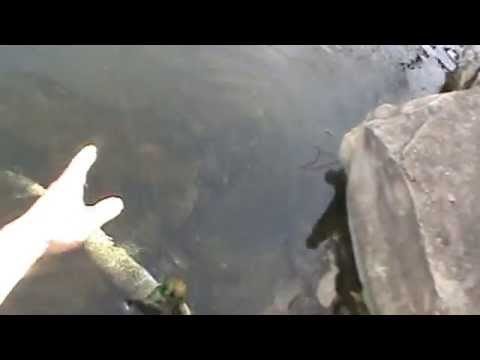 Pre Storm Pond Fishing   Multi Species