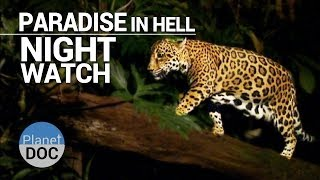 Paradise in Hell. Night Watch | Nature - Planet Doc Full Documentaries