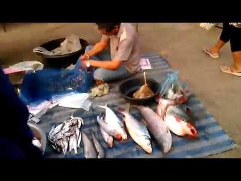 ปรสิตไทยในประเทศไทย