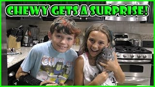 CHEWY GET'S A BIG SURPRISE! | We Are The Davises