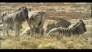 Ecosystem - Savanna