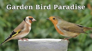 Videos for Cats to Watch - Garden Bird Paradise ~ 8 HOURS