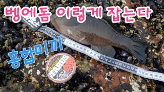 Opaleye rock fishing Store 85