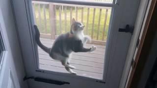 Приколы с котами 2018 Лучшая подборка с котиками!