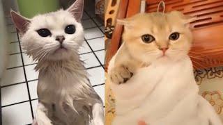 Meilleures Vidéos Drôles de Chat et de Chien 🐶🐱- Best Funny DOGS et CATS #168