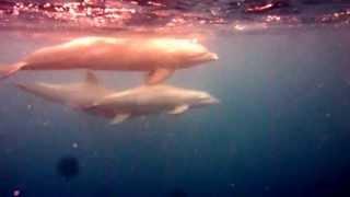 preview picture of video 'Rencontre avec des dauphins dans la Baie des Saintes (Guadeloupe)'