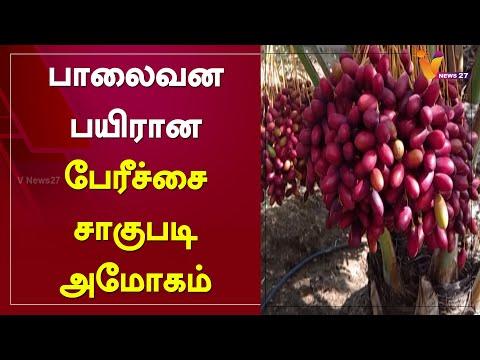 , title : 'பாலைவன பயிரான பேரீச்சை சாகுபடி அமோகம் | Desert Dates | Cultivation