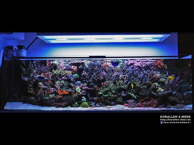 1000l Meerwasseraquarium / 265gal Reef Tank