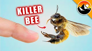 STUNG by a KILLER BEE!