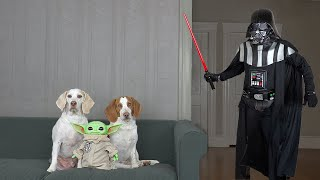 Baby Yoda & Dogs vs Darth Vader Prank: Funny Dogs Maymo & Potpie Lightsaber Battle w/Darth Vader