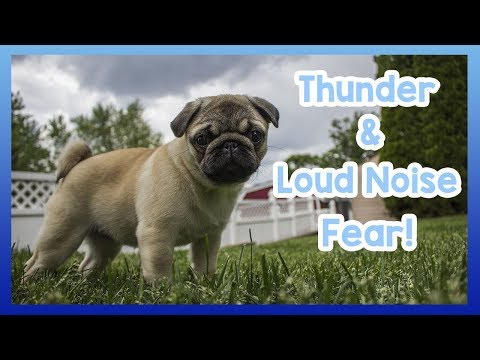 How to Stop Your Dog Being Scared of Thunder and Loud Noises! 6 Tips to Calm Your Dog During Thunder