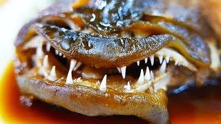 Japanese Street Food - BLACK SADDLE GROUPER Fish Soup Sashimi Japan
