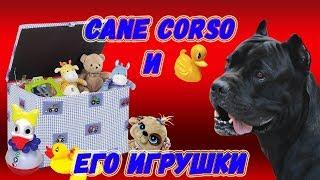 Про игрушки собаки кане корсо Деррека.#canecorso