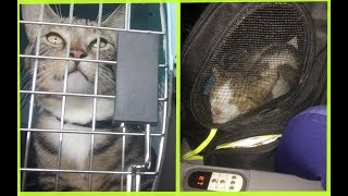 Cats on a plane!   How we traveled with our cats (Cargo and Cabin)