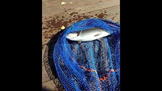 Золотой карась платная рыбалка огуднево форум