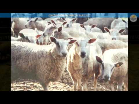 Voir la vidéo : Ring Ovins et Caprins du 01 mars 2017, partie 3