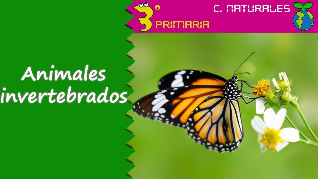Ciencias de la Naturaleza. 3º Primaria. Tema 5. Animales invertebrados