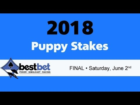 bestbet Puppy Stakes Final 2018