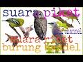 Download Lagu Suara burung ribut buat burung yang bandel mau turun arif channel Mp3 Free